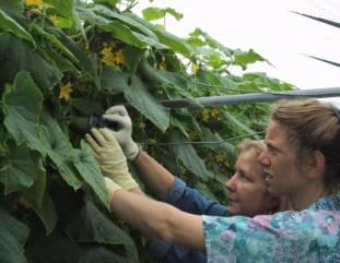 australian citrus harvest handbook